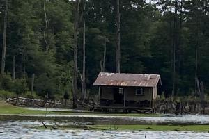 Lucedale Timber and Recreational Property