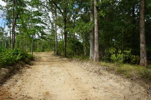 Kennedy Timber & Hunting Tract - Pickens County, AL