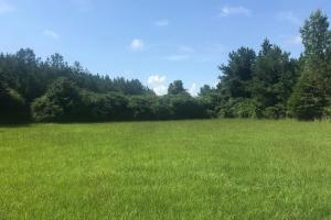 Dodsen Creek Hunting & Timber Investment Tract - Fayette County, AL