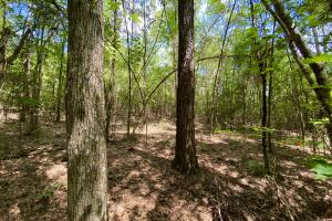 Kings Timber and Recreational Tract - Conecuh County, AL