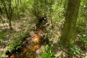 Pine and Hardwood Creek Tract - Conecuh County, AL