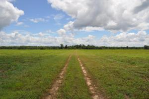 Sipsey River Hunting & Row Crop Tract - Tuscaloosa County, AL
