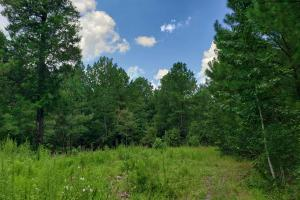 Deer Park Timber & Hunting Investment - Washington County, AL