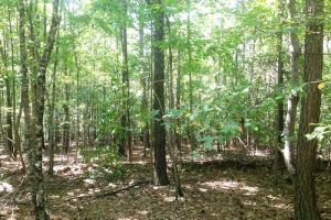 Haralson Recreational Homesite - Haralson County GA