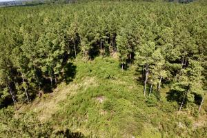 Divisible Troy Highway Timber & Hunting Investment  - Montgomery County, AL