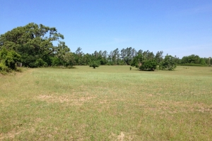 Country Farm and Timber Estate - Barnwell County SC