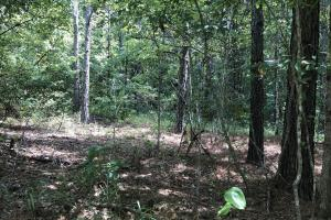 Secluded 163 ac. off Ship Island Rd. - Montgomery County, MS