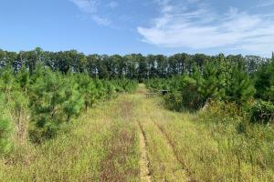 Timber Investment and Hunting Property Near Oktibbeha County Lake  - Oktibbeha County, MS