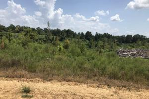 Carroll County Hunting Tract - Carroll County, MS