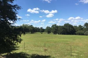 Ponce De Leon Horse Ranch, Beautiful Vistas in Walton County, FL (9 of 24)