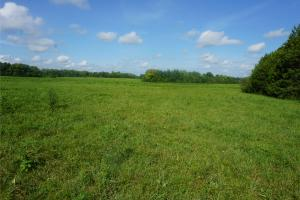 Greensboro Pasture and Hunting Tract - Hale County, AL