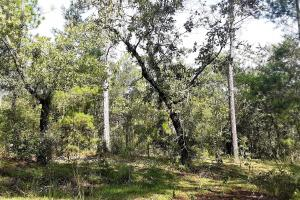 Interlachen Homesite  - Putnam County, FL