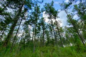 Troy Highway Pond Timber & Hunting Investment  in Montgomery County, AL (34 of 41)