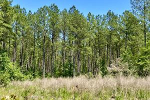 Troy Highway Pond Timber & Hunting Investment  in Montgomery County, AL (20 of 41)