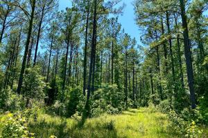 Troy Highway Pond Timber & Hunting Investment  in Montgomery County, AL (40 of 41)