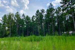 Troy Highway Pond Timber & Hunting Investment  in Montgomery County, AL (18 of 41)