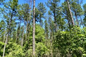 Troy Highway Pond Timber & Hunting Investment  in Montgomery County, AL (16 of 41)