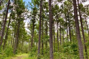 Troy Highway Pond Timber & Hunting Investment  in Montgomery County, AL (30 of 41)