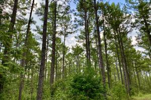 Troy Highway Pond Timber & Hunting Investment  in Montgomery County, AL (32 of 41)