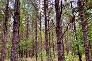 Troy Highway Pond Timber & Hunting Investment  in Montgomery County, AL (38 of 41)