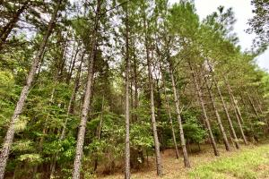 Troy Highway Pond Timber & Hunting Investment  in Montgomery County, AL (37 of 41)