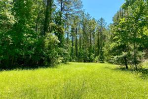 Troy Highway Pond Timber & Hunting Investment  in Montgomery County, AL (39 of 41)