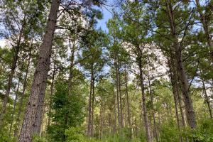 Troy Highway Pond Timber & Hunting Investment  in Montgomery County, AL (8 of 41)