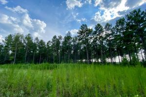 Troy Highway Pond Timber & Hunting Investment  in Montgomery County, AL (3 of 41)