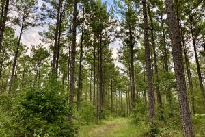 Troy Highway Pond Timber & Hunting Investment  in Montgomery County, AL (23 of 41)