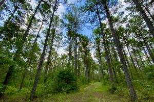 Troy Highway Pond Timber & Hunting Investment  in Montgomery County, AL (22 of 41)