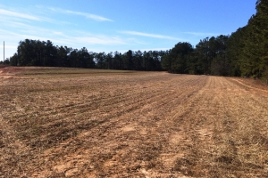 sc land for sale, estate land for sale, acreage for sale (6 of 23)