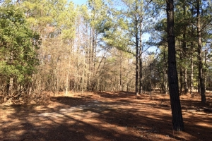 sc land for sale, estate land for sale, acreage for sale (8 of 23)