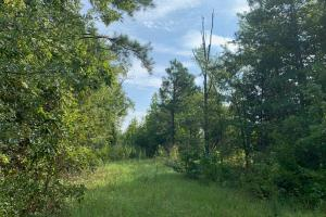 Wooded Hunting Tract outside Gordon - Wilkinson County, GA