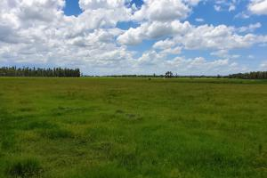 Zolfo Springs Farm and Ranch Land in Hardee County, FL (31 of 34)