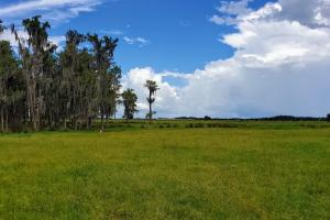 Zolfo Springs Farm and Ranch Land in Hardee County, FL (17 of 34)