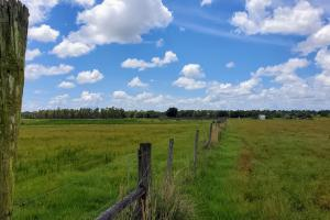 Zolfo Springs Farm and Ranch Land in Hardee County, FL (23 of 34)