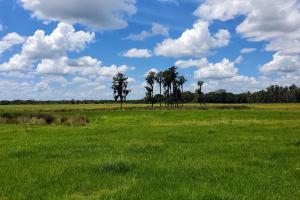 Zolfo Springs Farm and Ranch Land in Hardee County, FL (26 of 34)