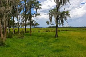 Zolfo Springs Farm and Ranch Land in Hardee County, FL (3 of 34)