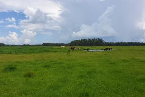 Zolfo Springs Farm and Ranch Land in Hardee County, FL (24 of 34)