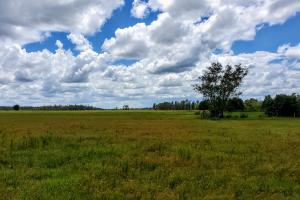 Zolfo Springs Farm and Ranch Land in Hardee County, FL (32 of 34)