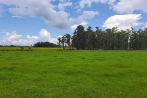 Zolfo Springs Farm and Ranch Land in Hardee County, FL (25 of 34)
