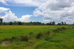 Zolfo Springs Farm and Ranch Land in Hardee County, FL (20 of 34)