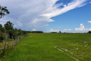Zolfo Springs Farm and Ranch Land in Hardee County, FL (27 of 34)