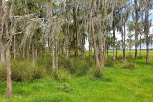 Zolfo Springs Farm and Ranch Land in Hardee County, FL (12 of 34)