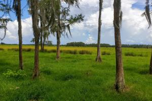 Zolfo Springs Farm and Ranch Land in Hardee County, FL (18 of 34)