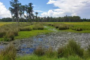 Zolfo Springs Farm and Ranch Land in Hardee County, FL (19 of 34)