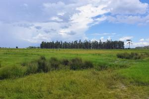 Zolfo Springs Farm and Ranch Land in Hardee County, FL (21 of 34)