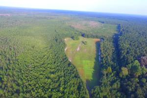 Bladen Forest Hunting Land - Bladen County, NC