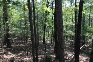 Sand Springs Church Road - Tract B - Pickens County, AL