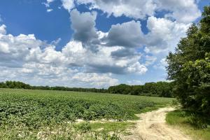 Sylvester Row Crop Farm and Potential Rural Homesite  - Worth County, GA
